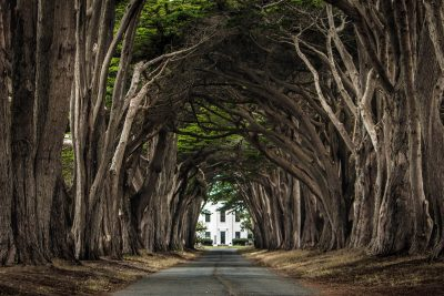 Cypress Tree Tunnel - Point Reyes National Seashore