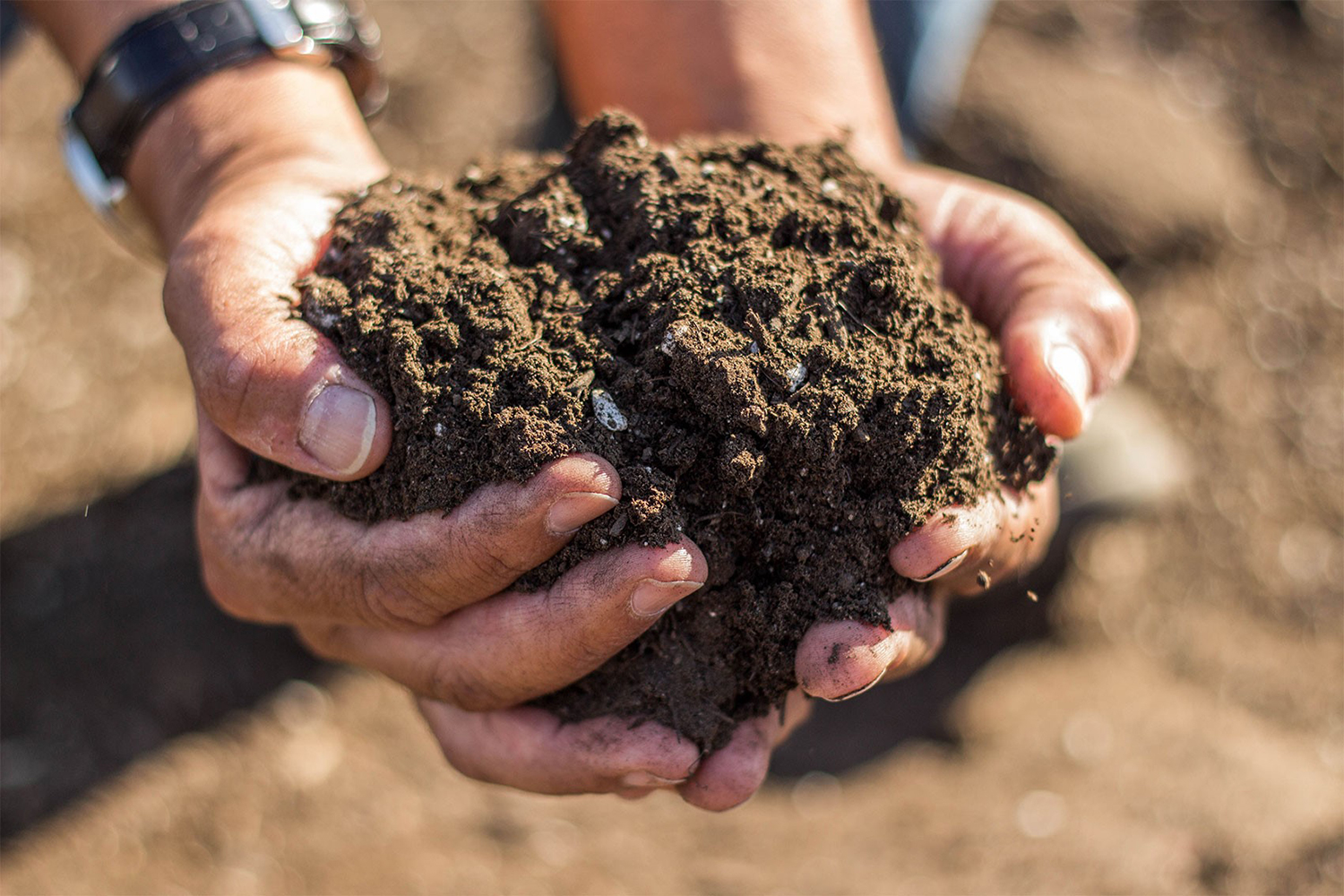 Soil in Hands Photography